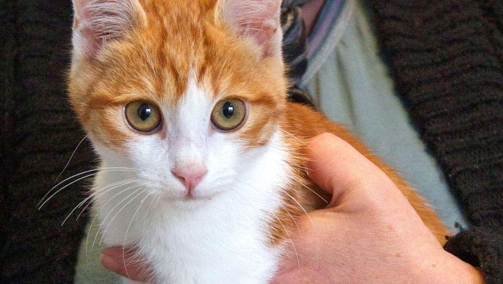 Marseille: Katzenquäler muss ein Jahr in Haft