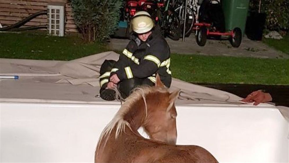 Hamburg: Steht ein Pferd im Pool