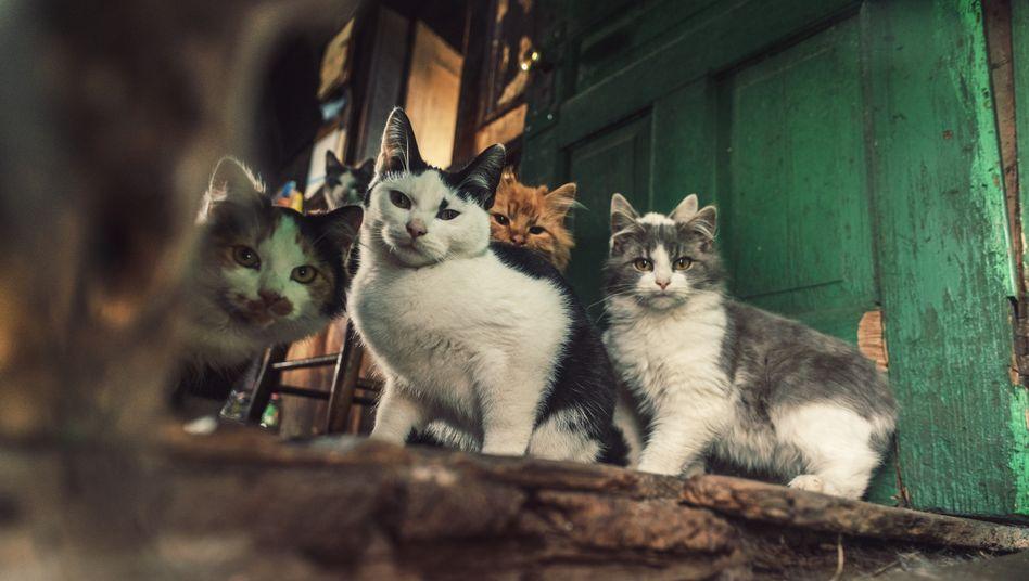 Katzen als Sammelobjekt: »Nur Katzenfutter stand säckeweise herum«