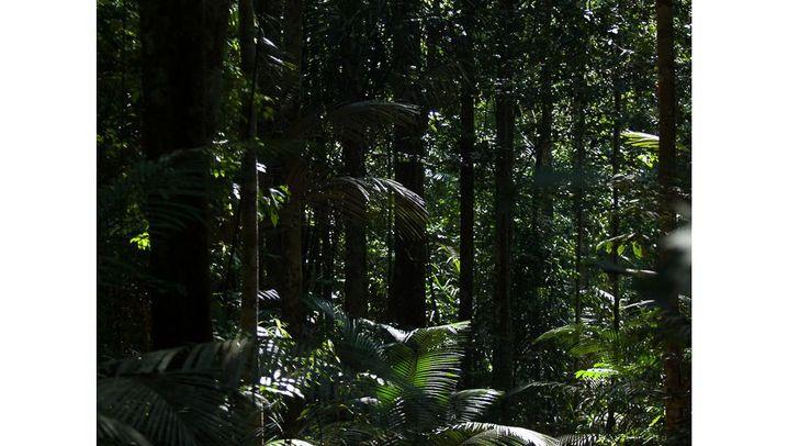 Baumklettern am Amazonas: Unter Aras, Affen und Fröschen