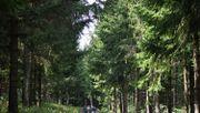 Etwa die Hälfte der europäischen Baumarten gefährdet
