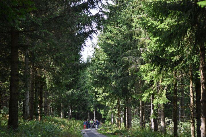 Wald im Biosphärenreservat Rhön: Monokulturen aus Nadelbäumen sind besonders Anfällig für Stürme und Dürre