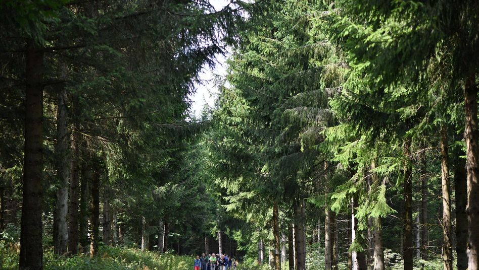 Wald in Thüringen im Biosphärenreservat Rhön