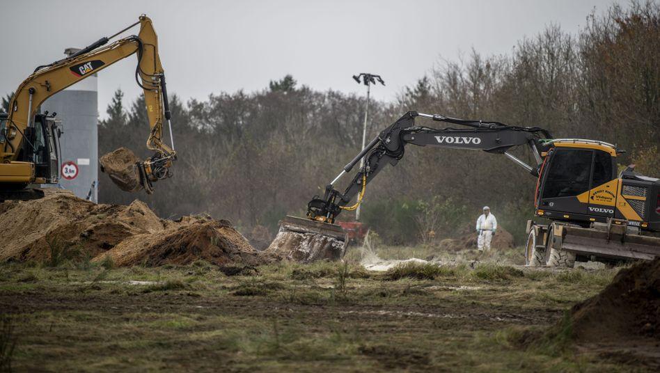 Massengräber für Nerze: Mitglieder der dänischen Gesundheitsbehörden entsorgen die toten Tiere in einem Militärgebiet in der Nähe von Holstebro