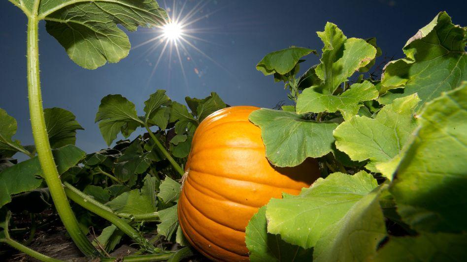 Sommerliche Hitze im Herbst: An diesem Wochenende könnte es nochmal bis zu 29 Grad heiß werden