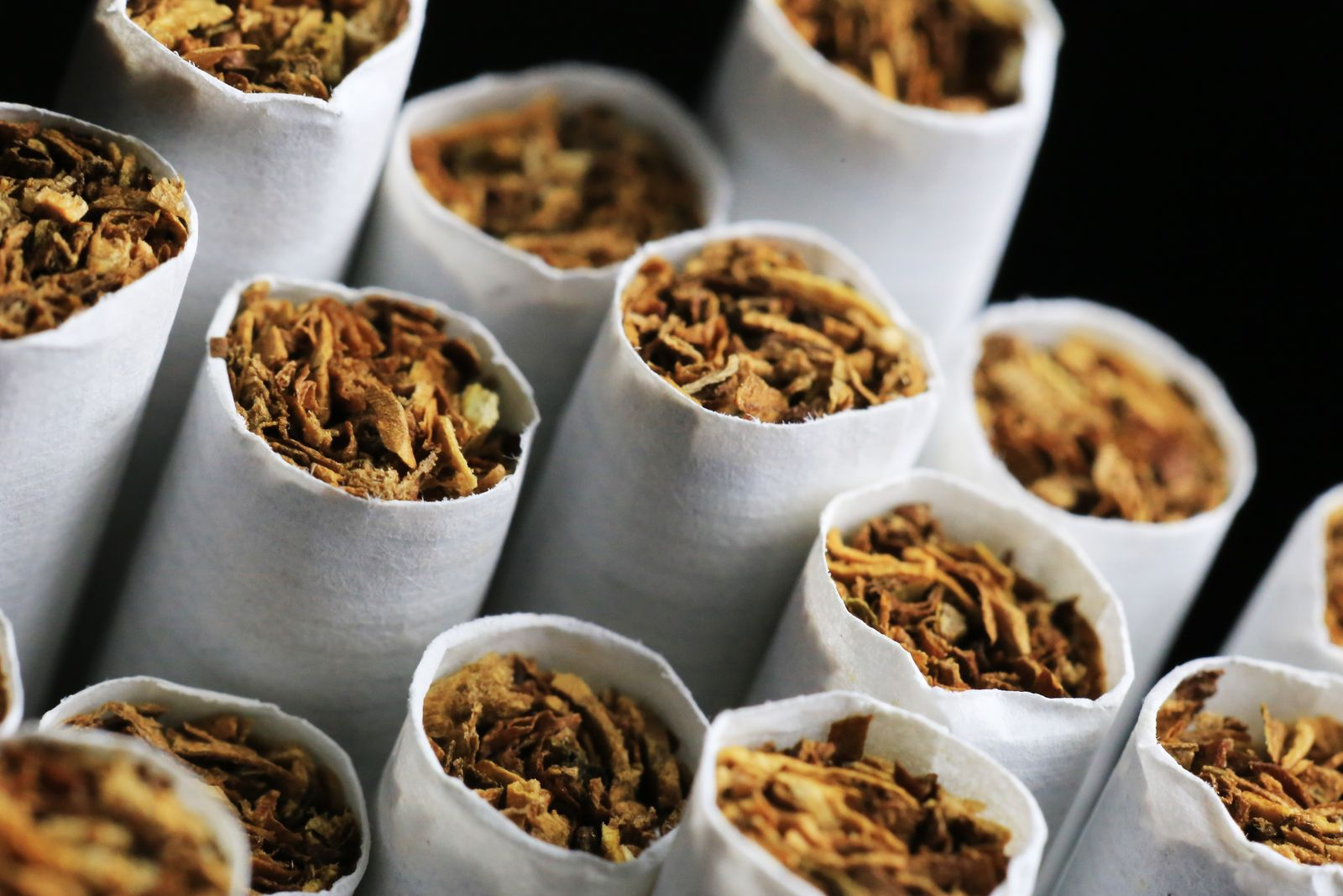 Close-up of Tobacco in Cigarettes