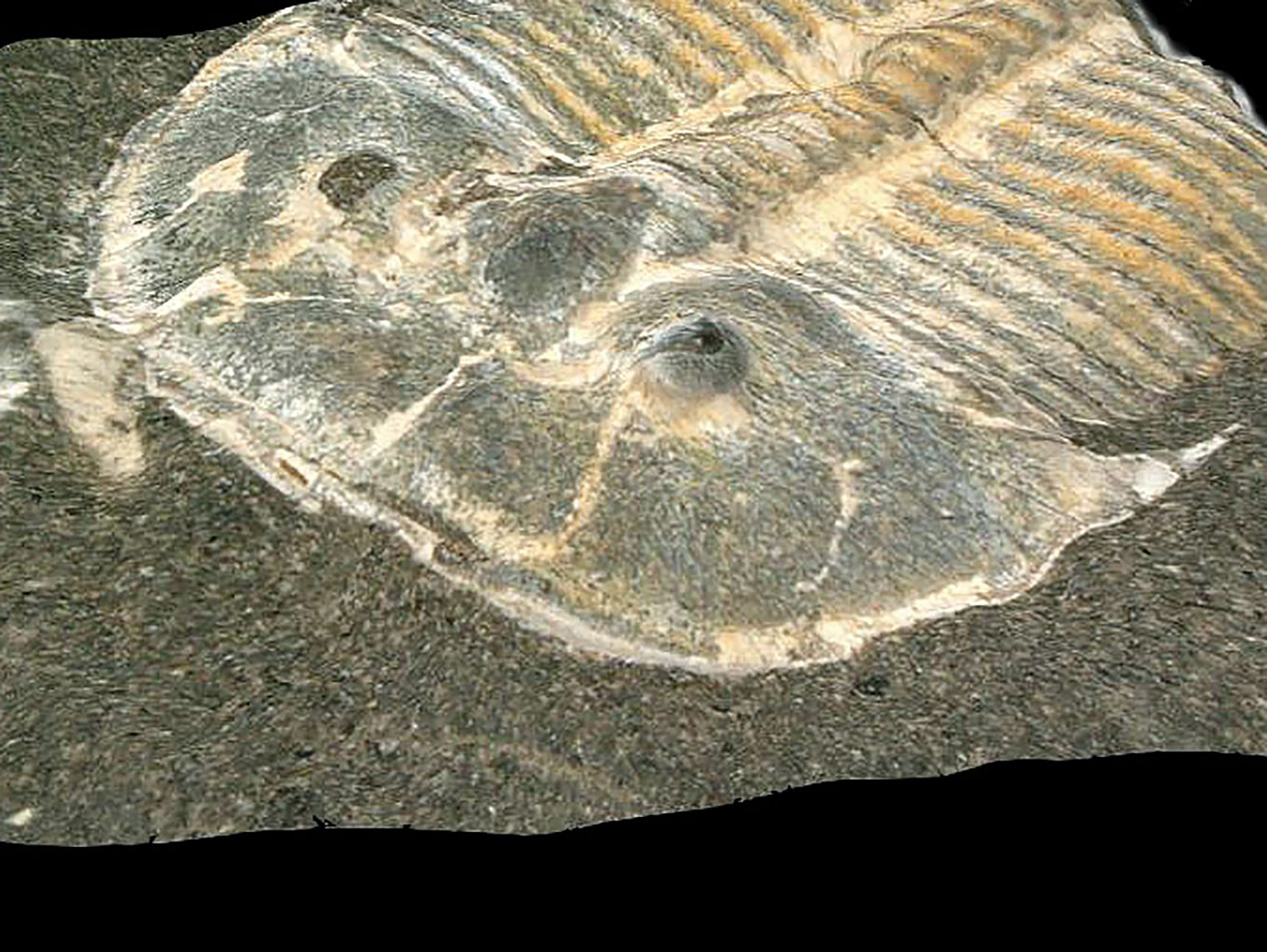 SCIENCE-NATURE-FOSSIL