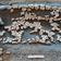 Elf Millionen Jahre alte Schildkröte der Ur-Nordsee entdeckt