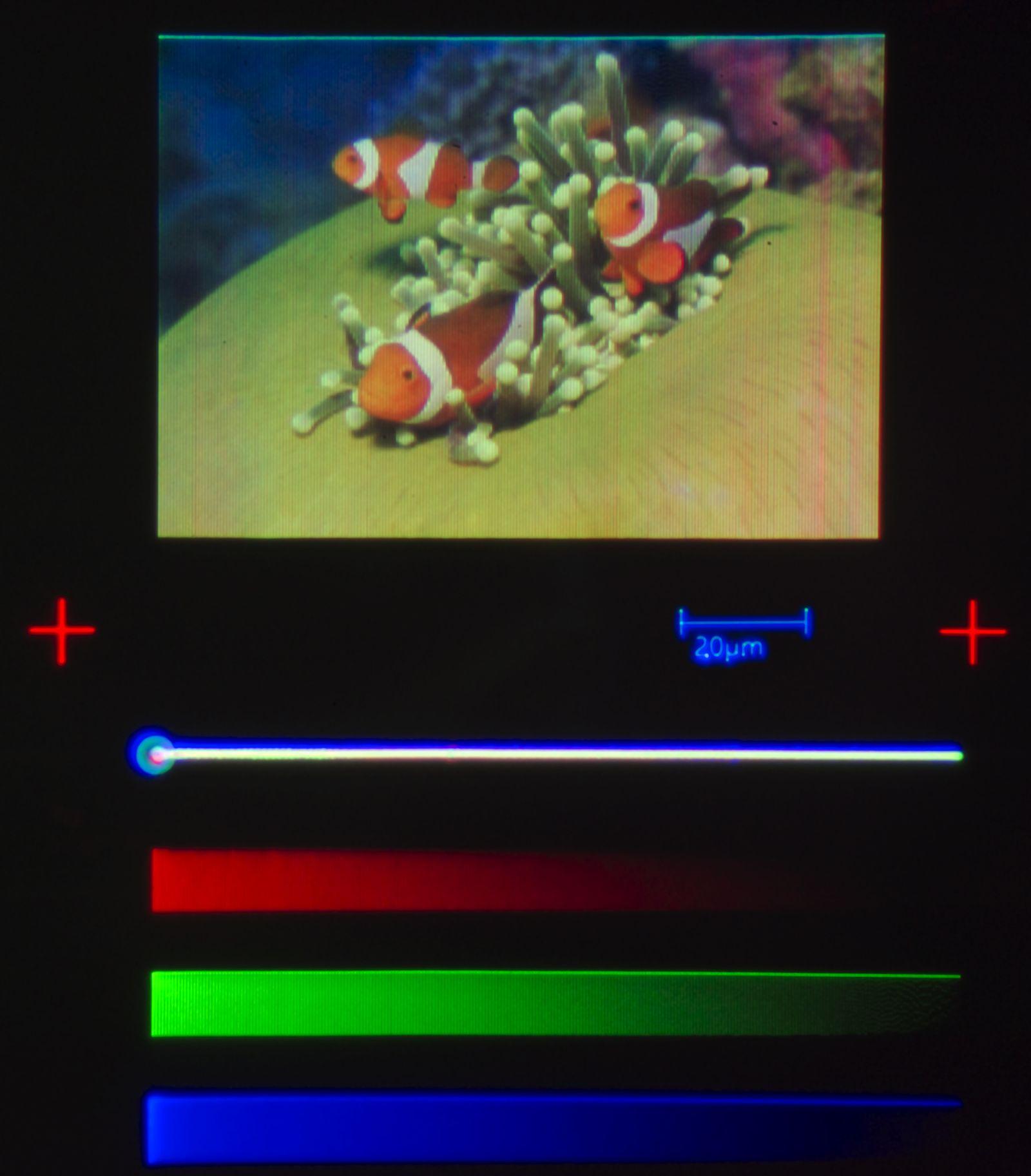 EINMALIGE VERWENDUNG Kleinstes Farbbild der Welt / Clownfischq