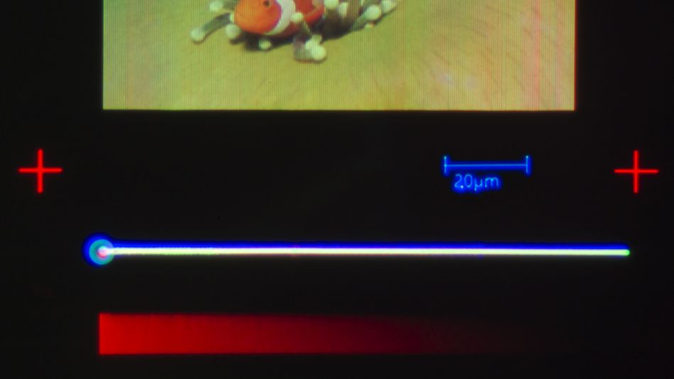 Nemo ganz klein: Der Abstand zwischen zwei Pixeln betrage 500 Nanometer, berichtet die ETH Zürich