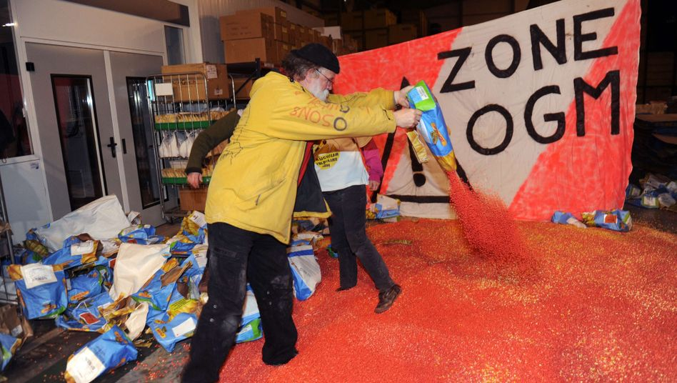 Radikaler Protest: Französische Aktivisten verschütten Monsanto-Genmais Mon 810