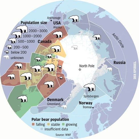 The polar bear population of the Arctic.