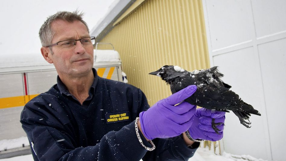 Mysteriöser Tod: Forscherrätseln über Vogel-Massensterben