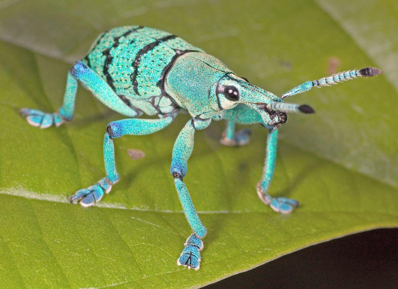 insektenevolution schraubgewinde lassen käfer besser