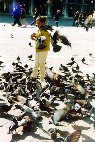 Tauben auf dem Markusplatz: Ende einer venezianische Taubenfutterverkäuferdynastie