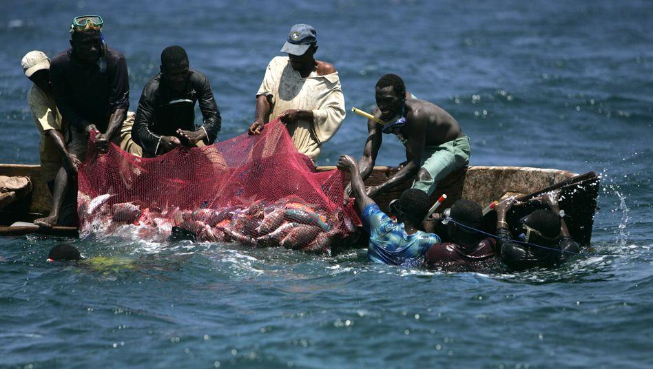 Fischfang vor afrikanischer Küste: Die Fangrechte sind ein kostbares Gut