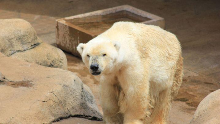 Zoo in Johannesburg: Abschied von Wang