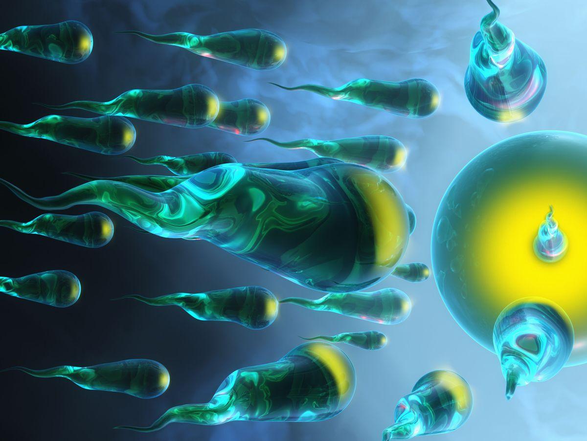 Warum ist die bewegungsfähigkeit der spermien wichtig