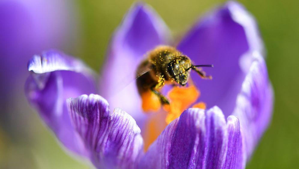 Ohne Worte: Bienchen und Blümchen