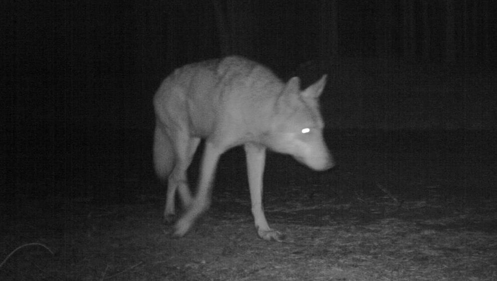 Photo Gallery: Quintessential Predator?
