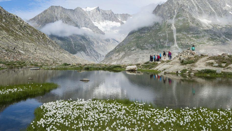 Aletschgletscher: Der Gletscher in den Alpen hat sich um mehrere Kilometer zurückgezogen