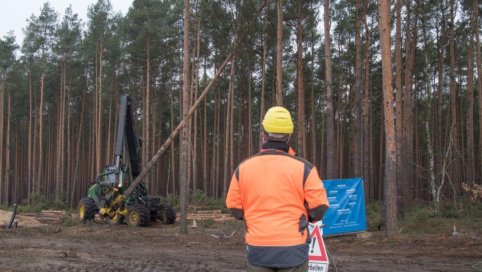 Die Rodungsarbeiten auf dem Gelände in Grünheide sind derzeit gestoppt