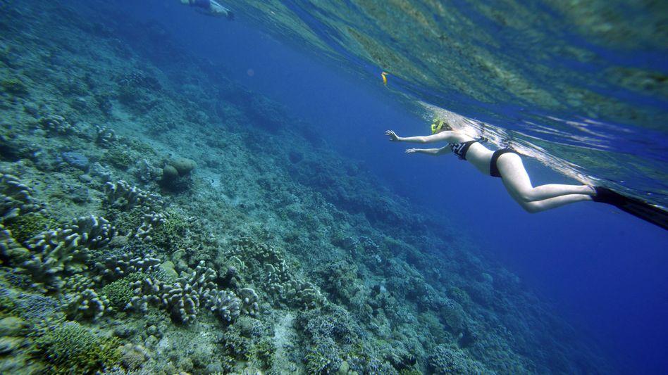 """Taucherin vor der indonesischen Küste (Mai 2009): """"Probleme ziemlich wahrscheinlich"""""""