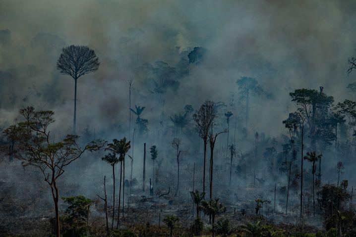 HANDOUT - 23.08.2019, Brasilien, Novo Progresso: Auf diesem von Greenpeace Brasilien zur Verfügung gestellten Bild stehen einzelne Bäume im Rauch bei einem Brand im Schutzgebiet Jamanxim im Staat Para. Angesichts der verheerenden Waldbrände im Amazonasgebiet setzt die brasilianische Regierung nun Soldaten bei den Löscharbeiten und der Verfolgung von Brandstiftern ein. Foto: Victor Moriyama/Greenpeace Brazil/dpa - ACHTUNG: Nur zur redaktionellen Verwendung im Zusammenhang mit der aktuellen Berichterstattung und nur mit vollständiger Nennung des vorstehenden Credits +++ dpa-Bildfunk +++ | Verwendung weltweit