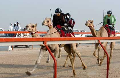 Spectators cheer on robot camel jockeys during a race at Al Shahaniyya Camel Racecourse on the outskirts of Doha.