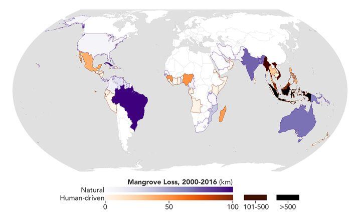 Die Karte zeigt den Verlust von Mangroven von 2000 bis 2016 in Kilometern. Die Forscher unterscheiden zwischen natürlichen und menschlichen Faktoren