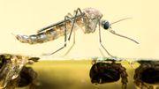 """Früher hat ein Mückenstich nur gejuckt - """"das ändert sich jetzt"""""""
