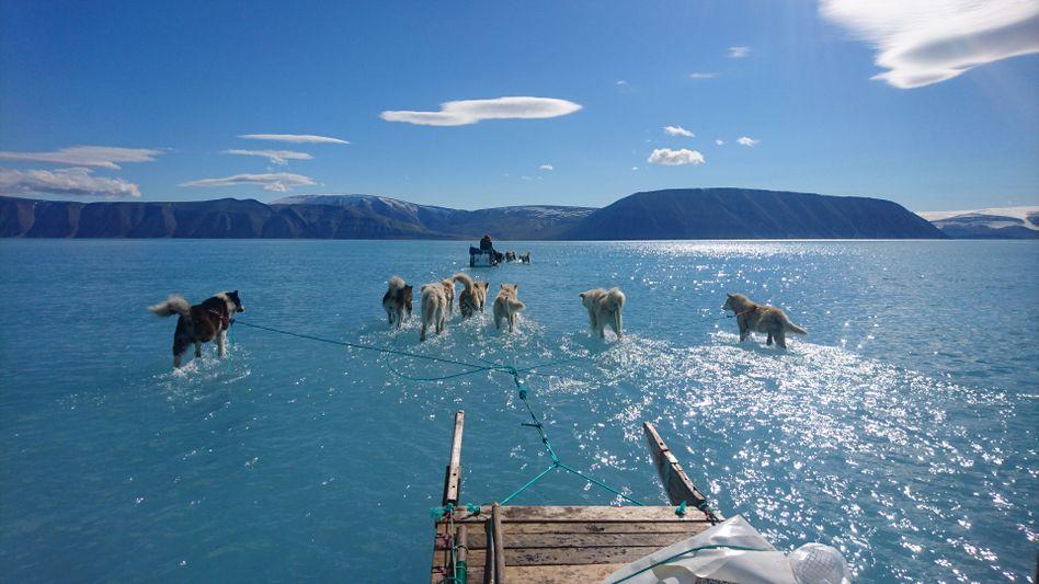 Grönland: Schlittenhunde im Schmelzwasser