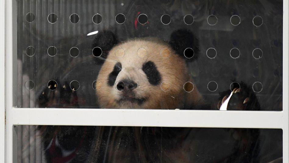 Pandabär Träumchen