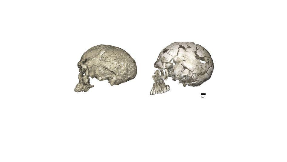 Links: Schädel aus Jebel Irhoud. Rechts: jüngerer Schädel.