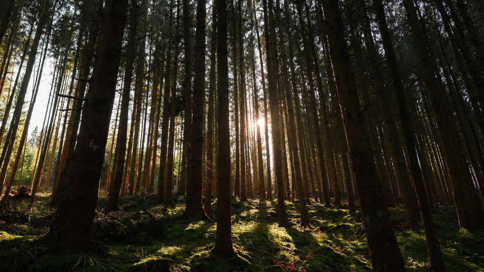 Wald in Baden-Württemberg: »Weder aus nationaler noch aus globaler Sicht ein Beitrag zu mehr Klimaschutz«