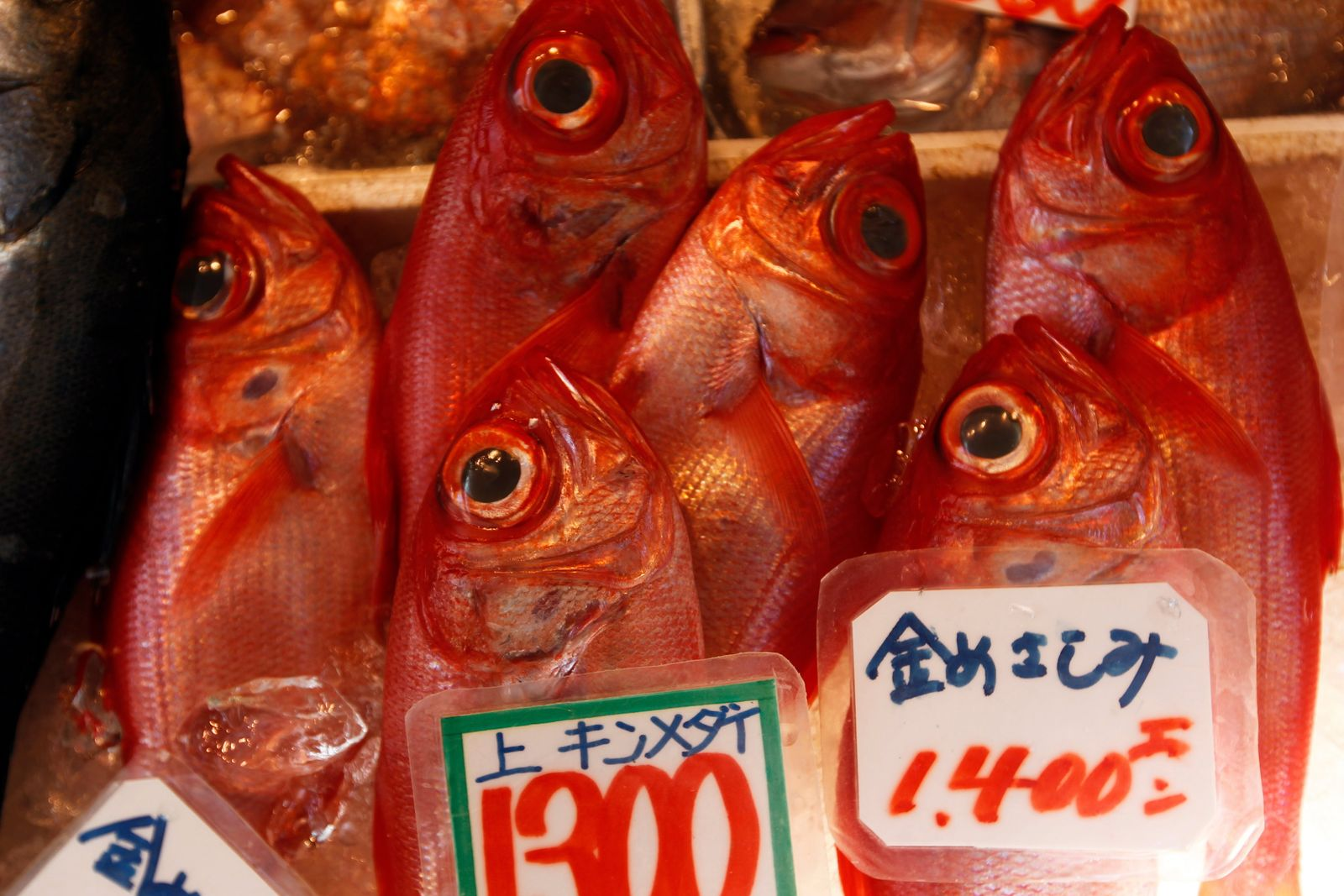 Fischmarkt / Tokyo / Japan