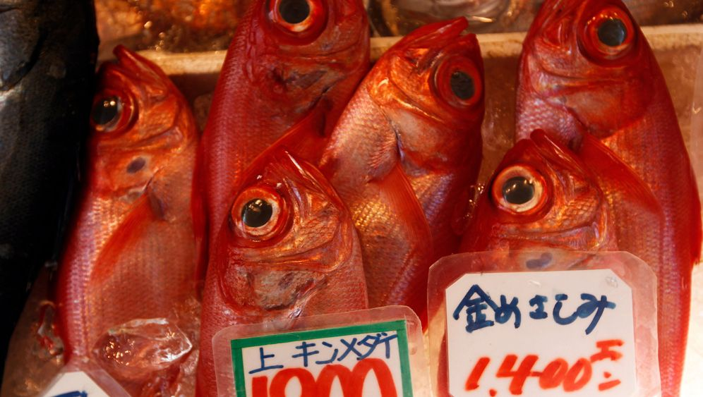Nach Fukushima: Meerestiere weiter belastet