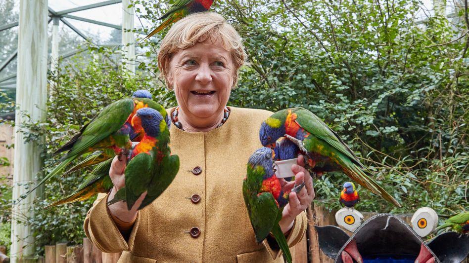 Angela Merkel im Vogelpark Marlow: Ein letztes Mal umflattert