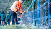 Brandenburg baut Schutzzäune gegen Schweinepest