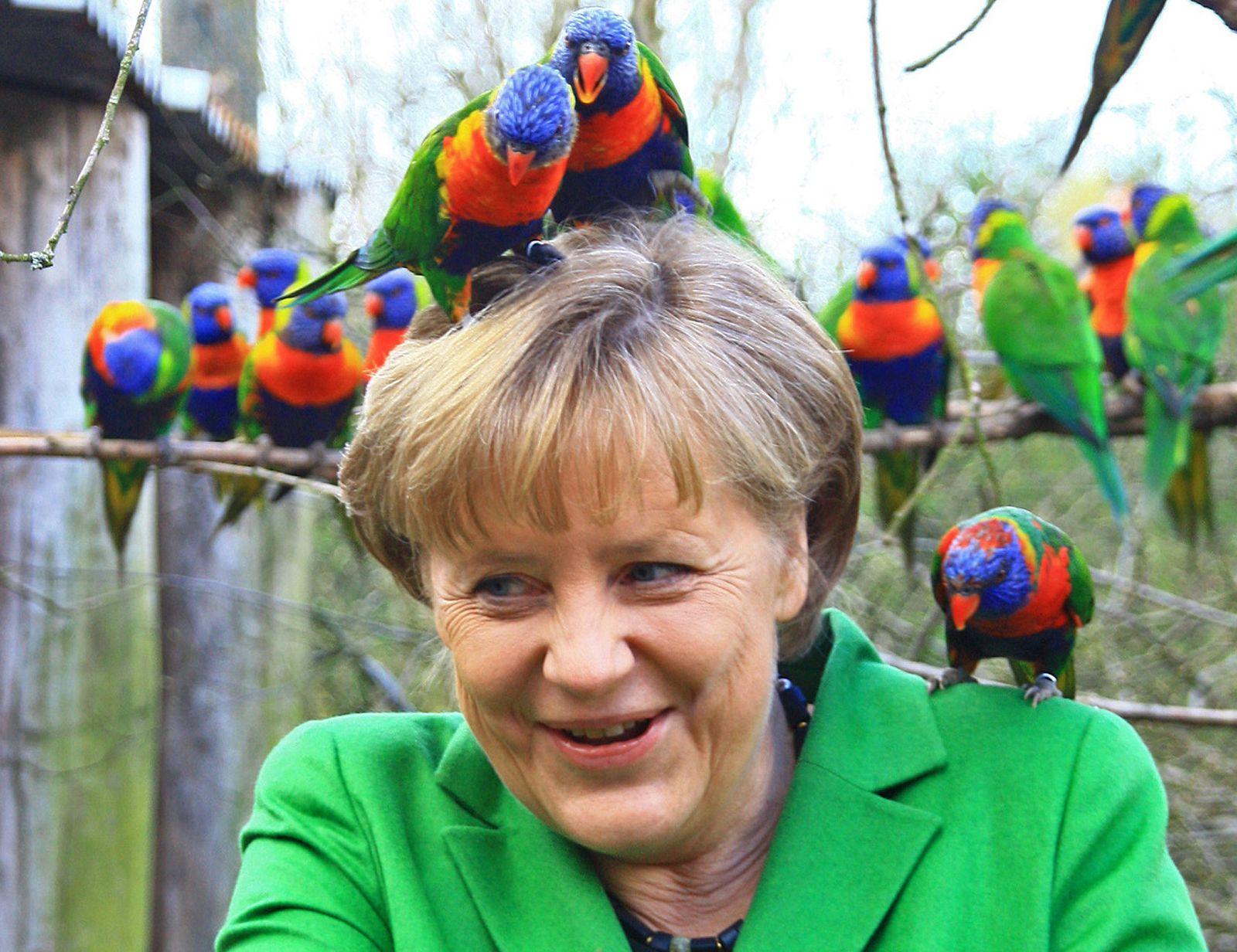Merkel / Papagei