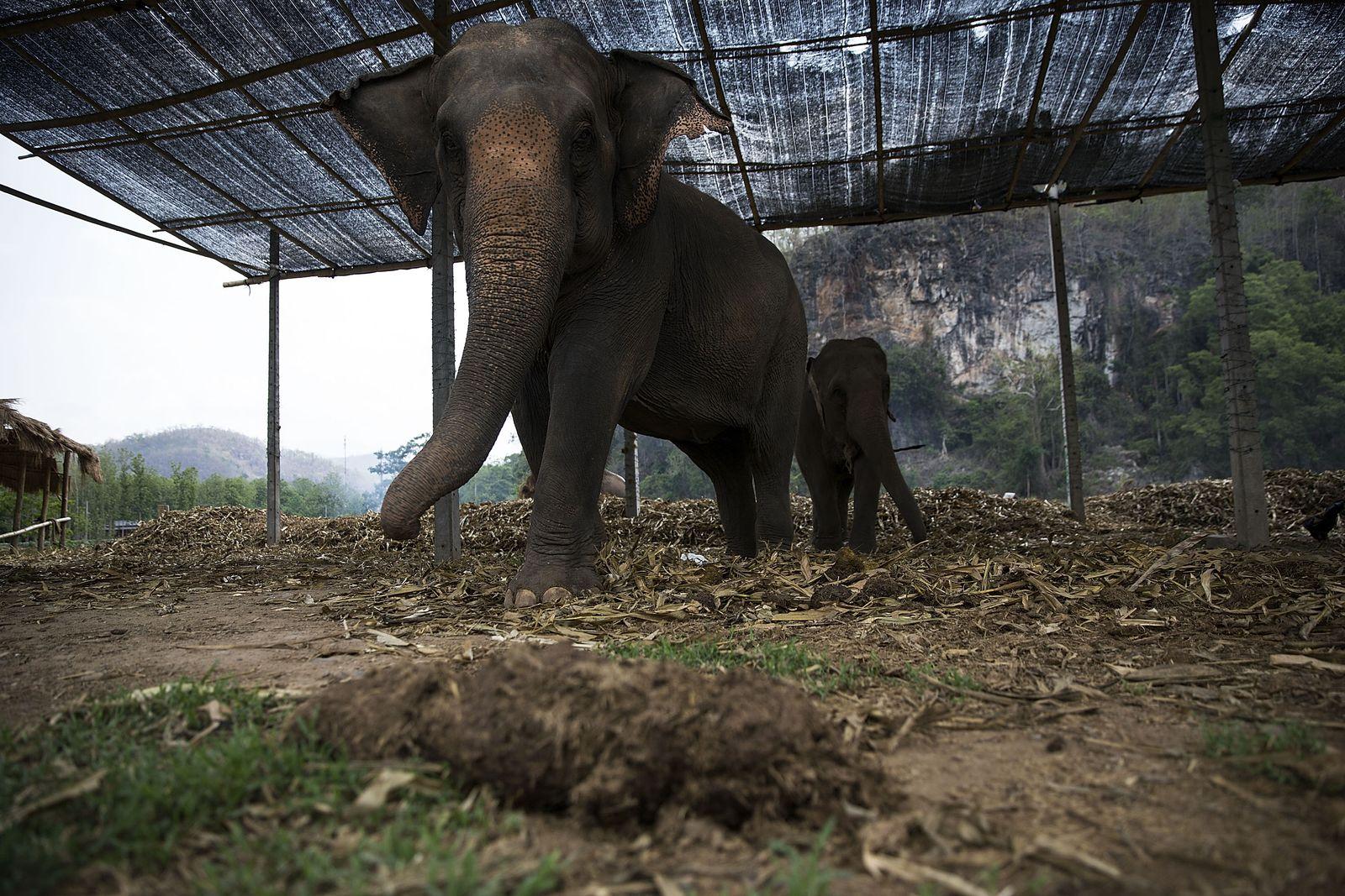 Thailand/ Elefant