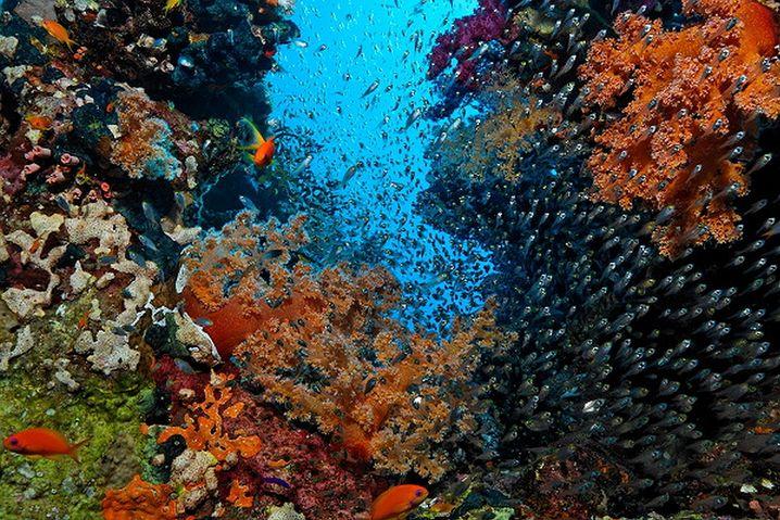Rotes Meer: Gegenüber der Andamanensee immer noch die bessere Adresse