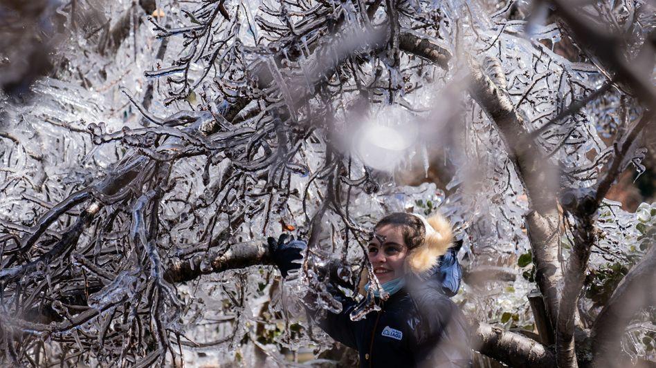 Vereister Baum in Sao Joaquim-Urupema