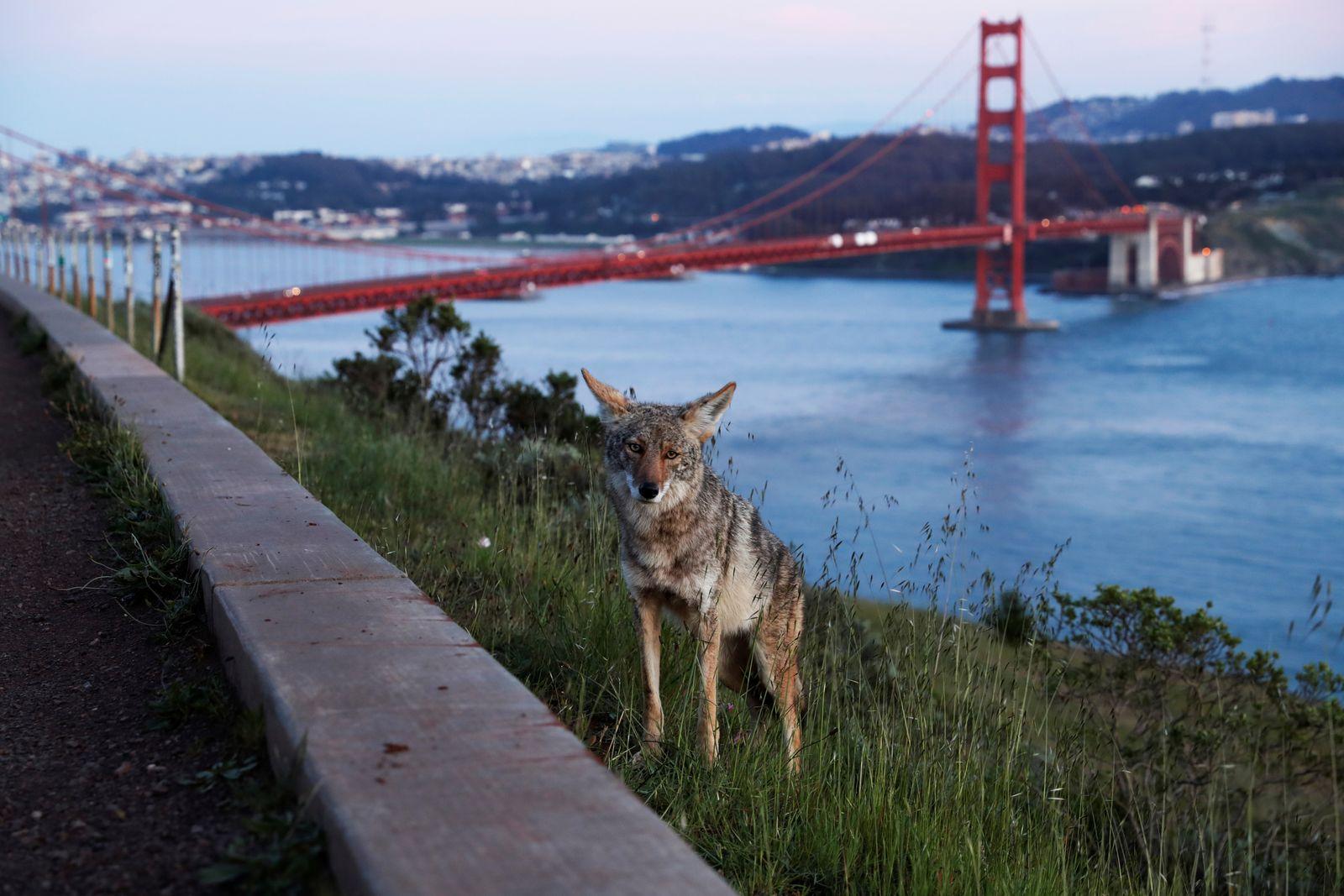Outbreak of the coronavirus disease (COVID-19) in San Francisco, California