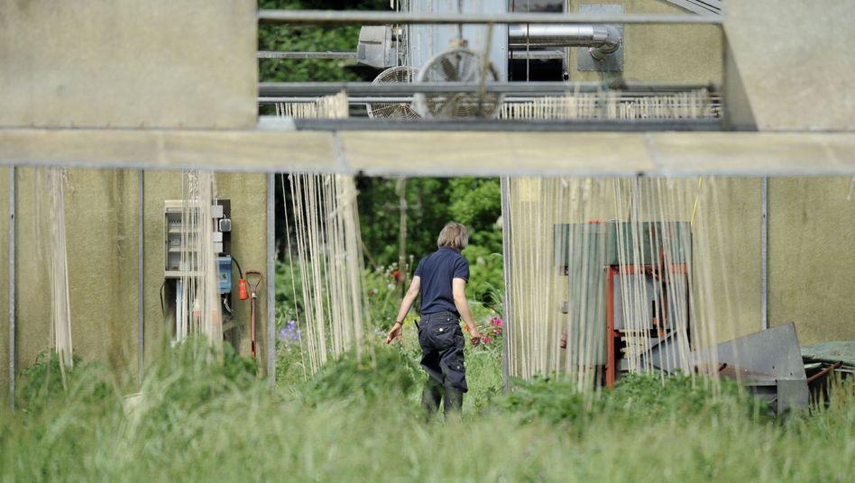 Betroffener Hof in Bienenbüttel: Öffentlich verkündete Schließung gilt nur für Sprossen