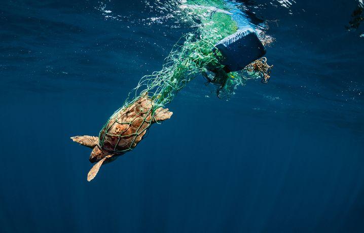 Diese Meeresschildkröte hat sich in einem treibenden Netz verfangen, konnte aber gerettet werden
