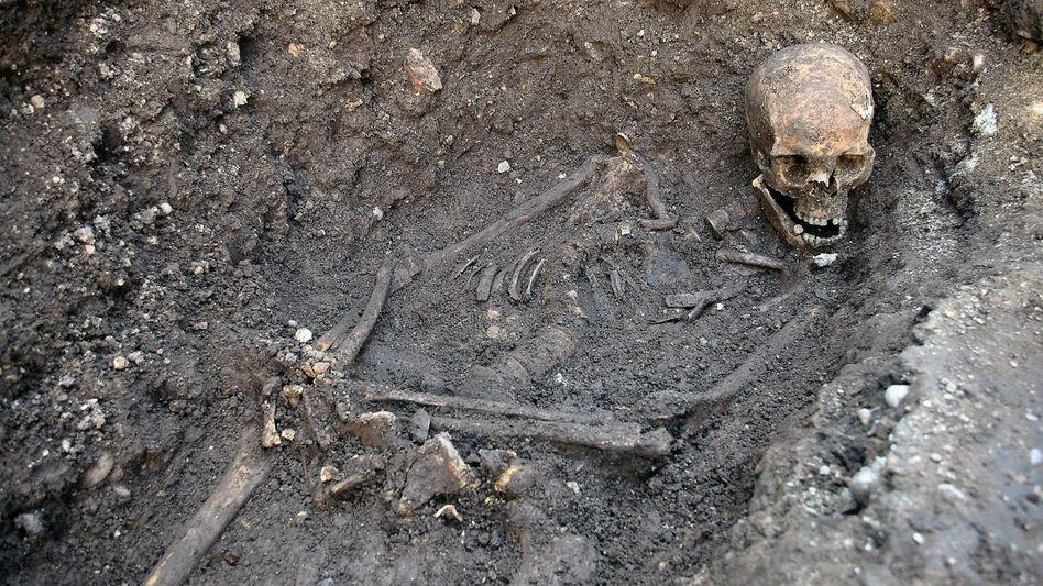 Gebeine Richards III., ausgegraben 2012 in Leicester.