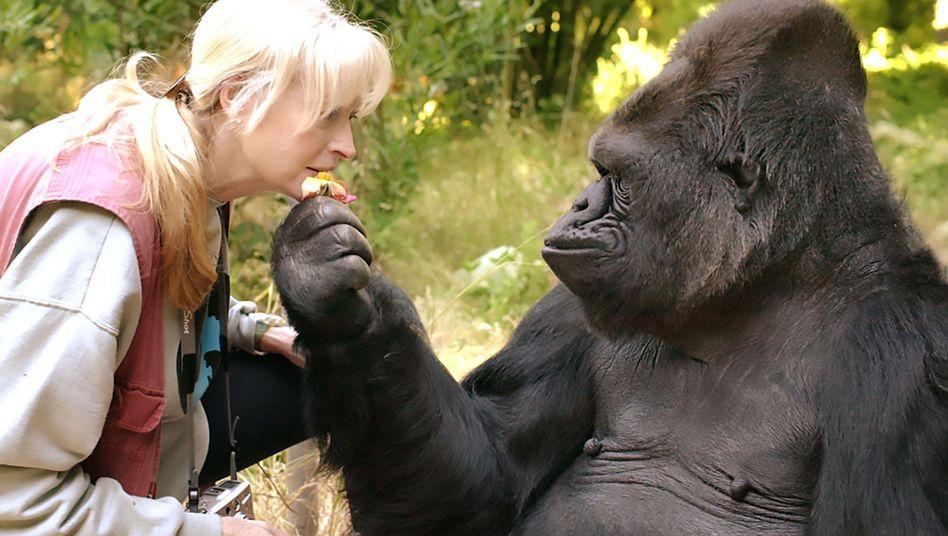 Gorilla Koko und Francine Patterson