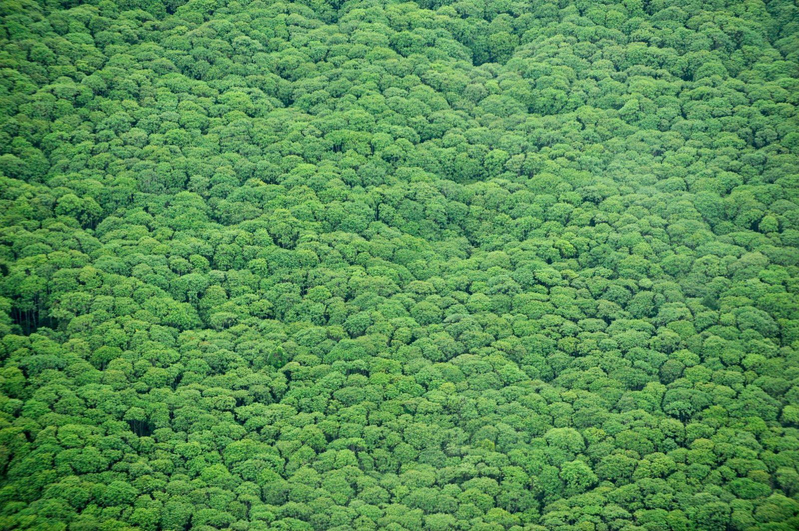 Wald/ Indonesien