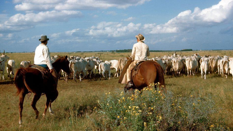 Cowboys und Rinder in Texas (Archivbild): Der US-Lieferanteil könnte auf 35.000 Tonnen pro Jahr steigen
